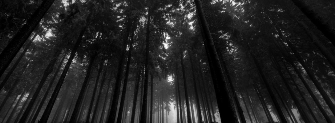 Listing_background_black-forest-wallpaper-10-1024x640