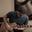 Listing_thumb_screen_shot_2015-03-11_at_7.29.34_pm