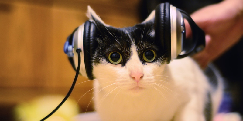 Listing_background_o-cat-listening-music-facebook